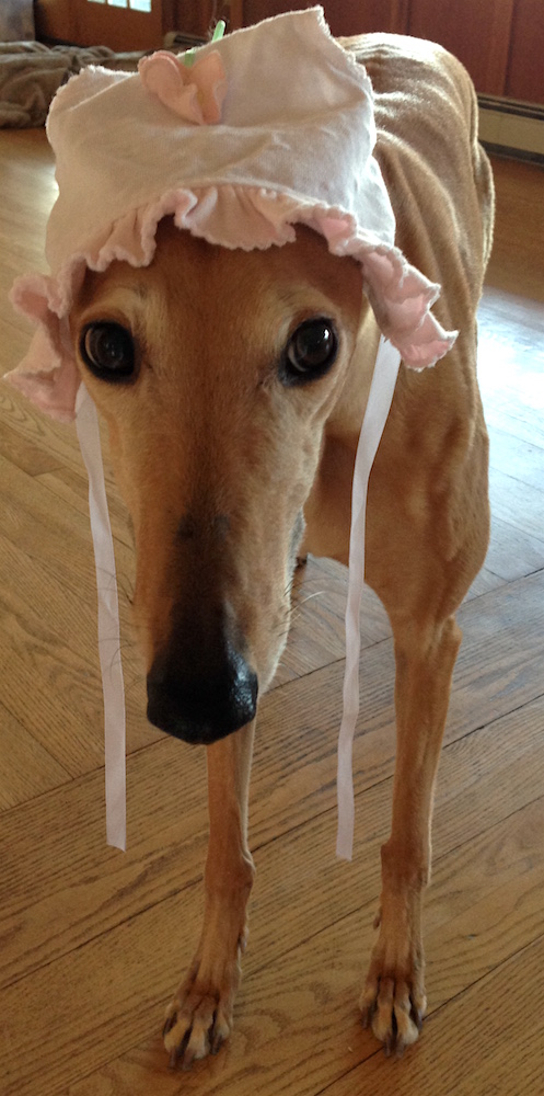 Frugal Hound wanted to wear the bonnet too