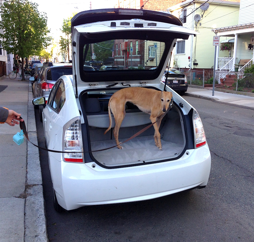 FH demonstrates our Prius' cargo space