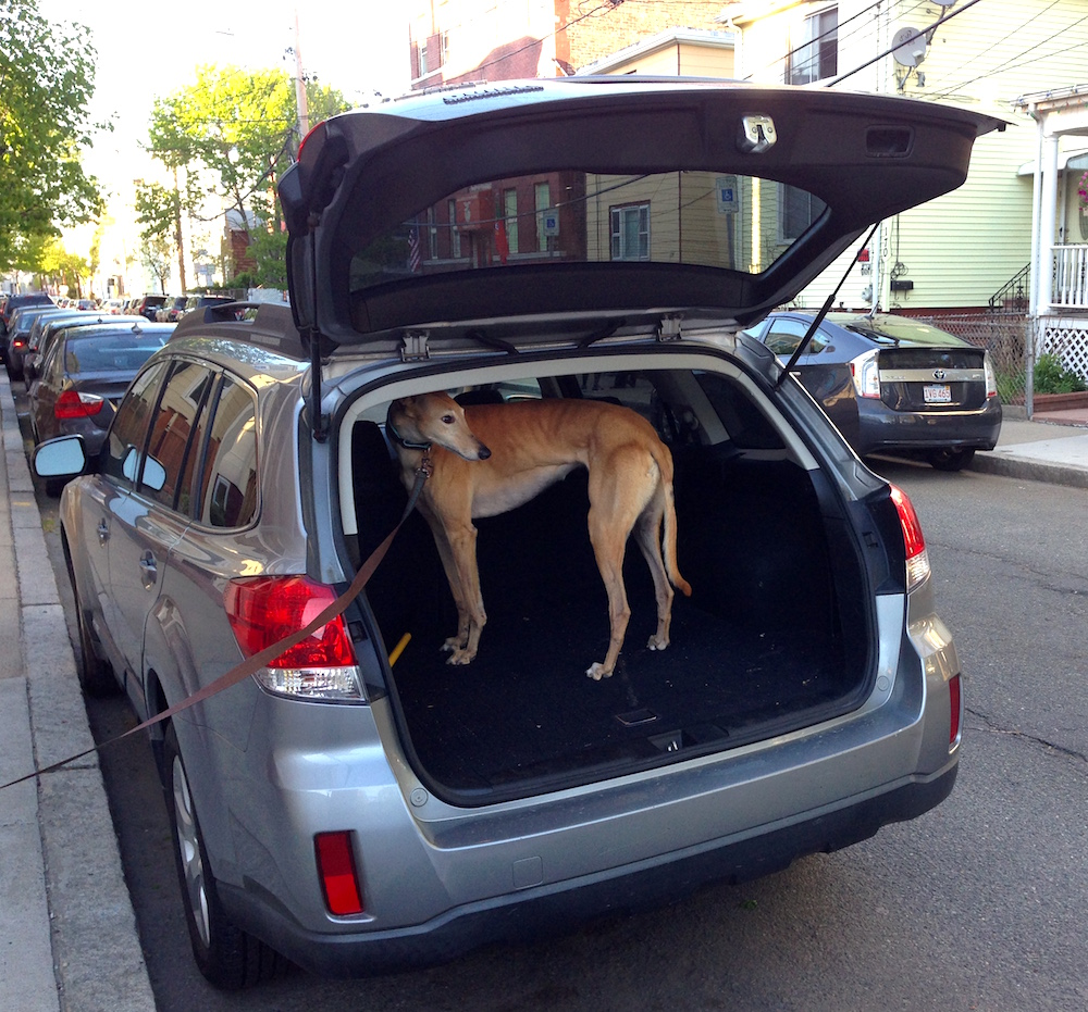 Frugal Hound modeling the Subaru's roomy trunk