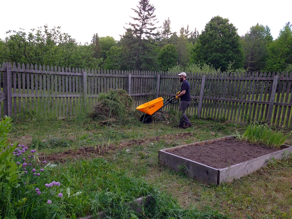 Mr. FW working on our veg garden clean-out