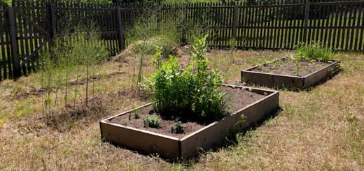 Veg_garden_after_land_cover