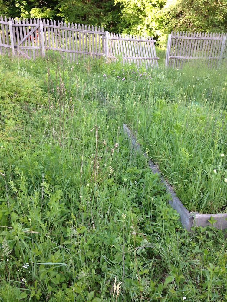 Veg Garden Before