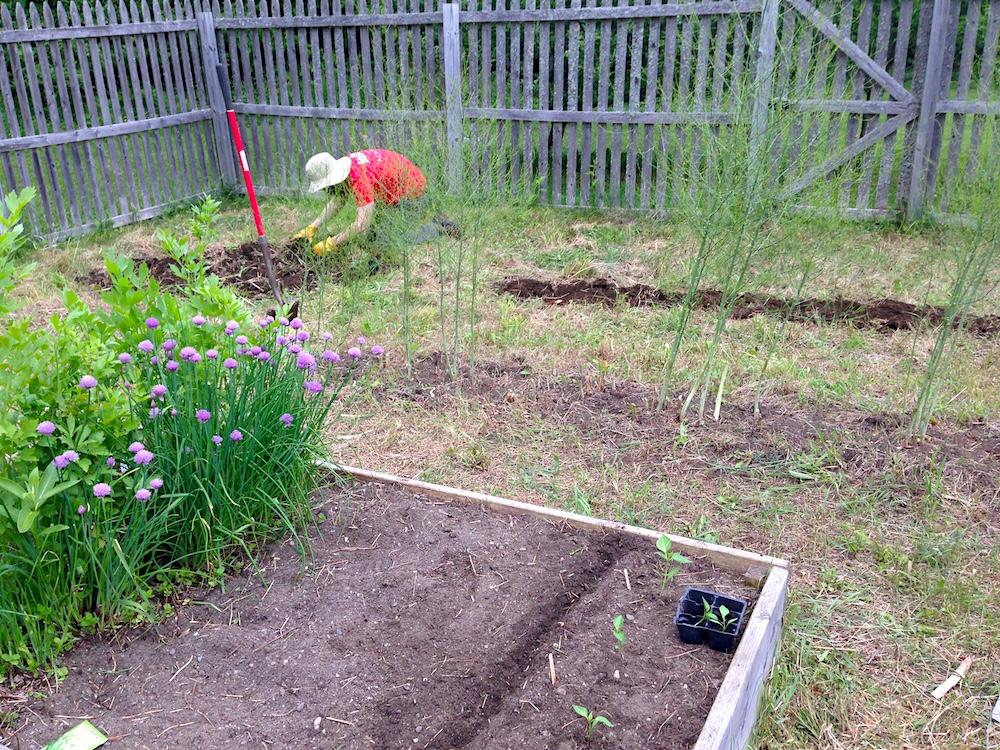 Mr. FW planting squash