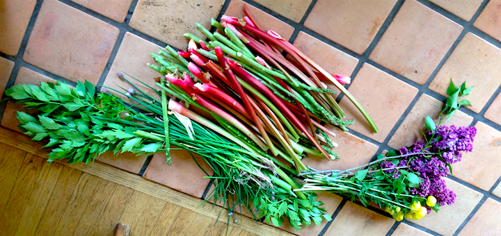 My latest haul: celery, flowers, asparagus, green garlic, and of course rhubarb!
