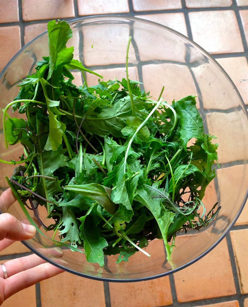Greens from the garden! Also, a weird close-up of our kitchen floor...