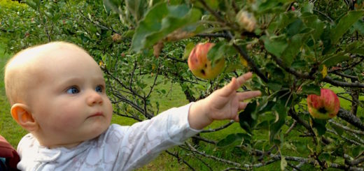 apple_tree_land_baby_cover_harvest