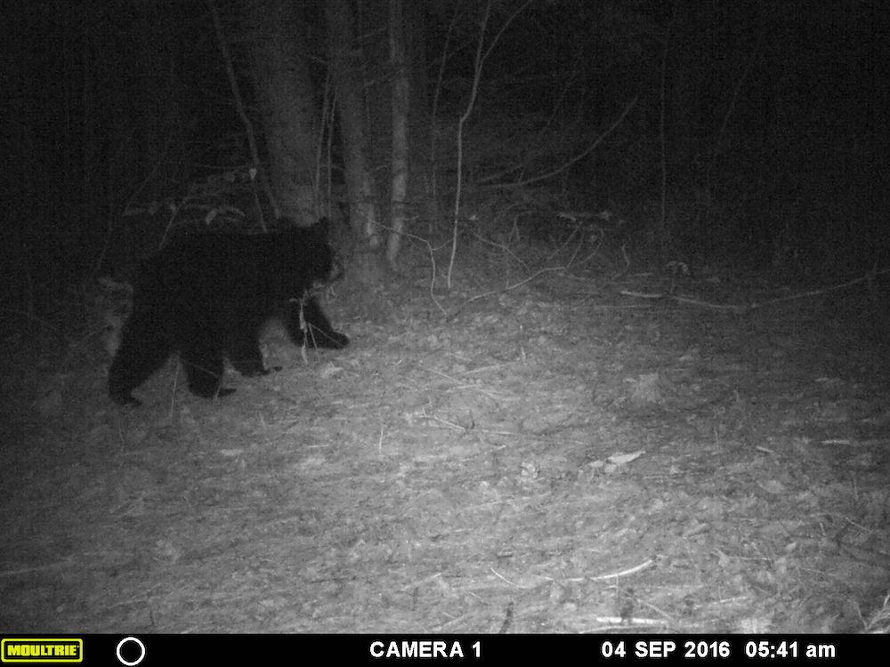 Black bear cub!