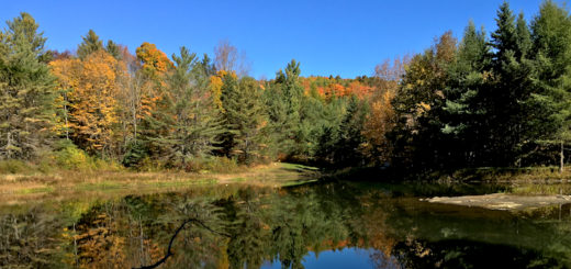 pond_fall_leaves_land_cover