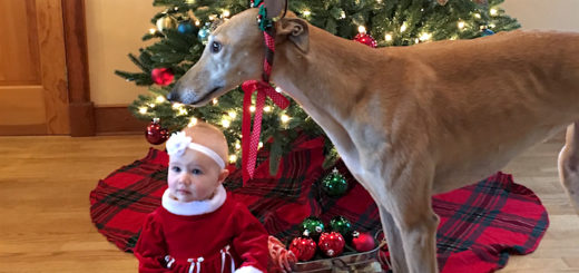 baby_hound_christmas_cover