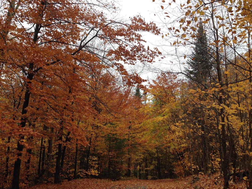 Driveway leaf view