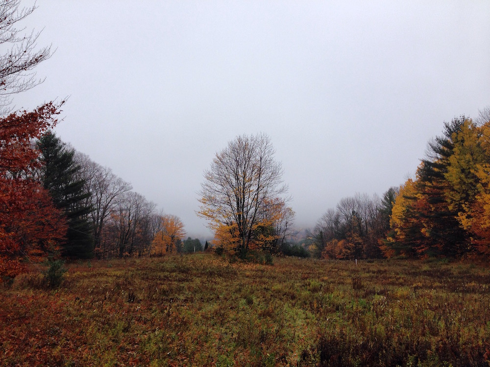 The upper field in late fall