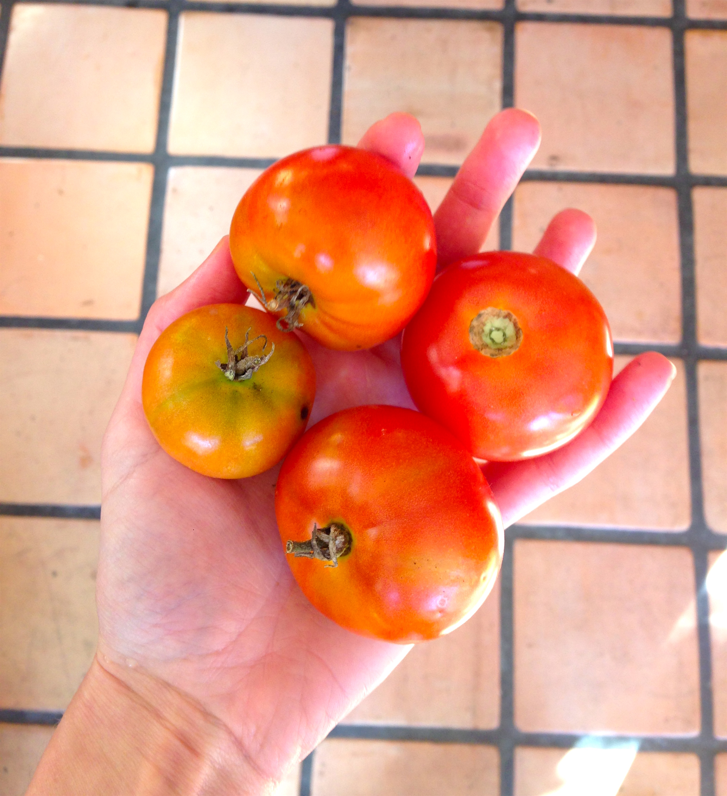 4 of our 8 tomatoes...
