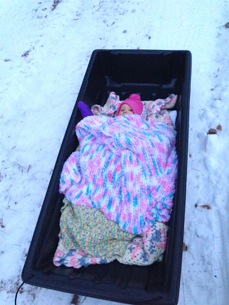 A snuggly Babywoods in her game sled
