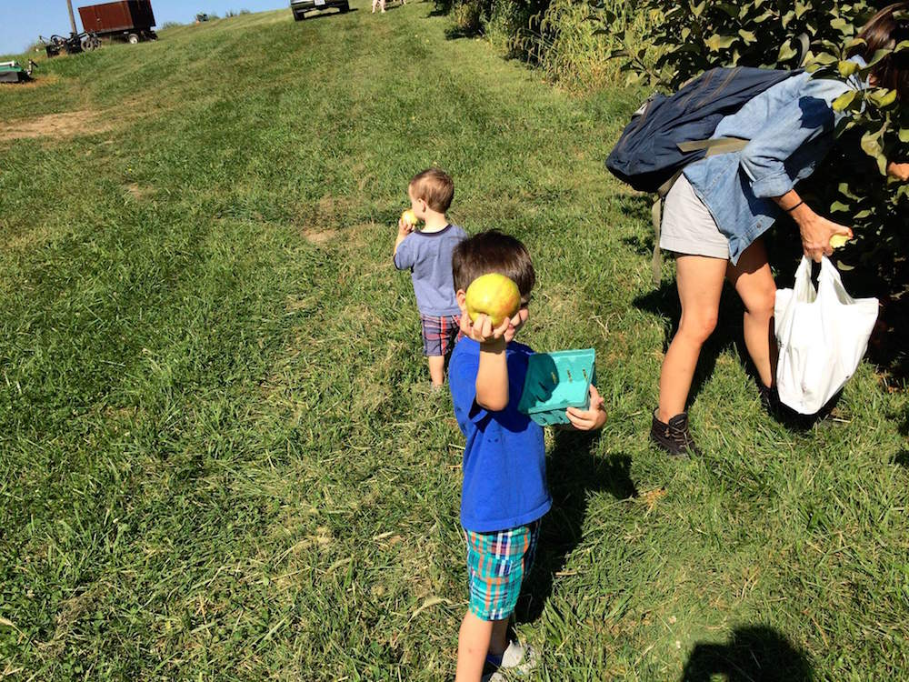 Grace's sons apple picking