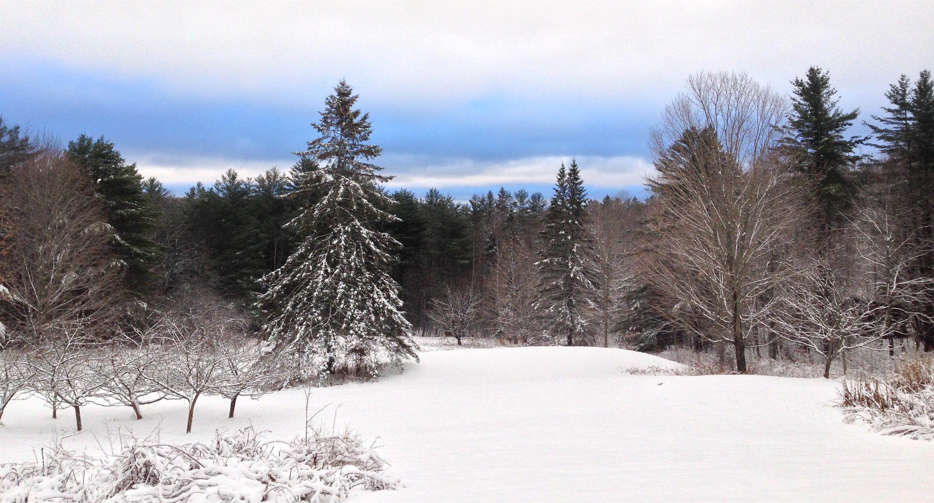 Winter on the homestead