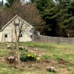 This Month On The Homestead: Mud, Trellises, and The Land Trust