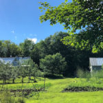 This Month On The Homestead: Harvest Time, Berry Time, And Toilet-Fixin' Time