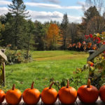 This Month On The Homestead: Apple Cider and Pumpkins
