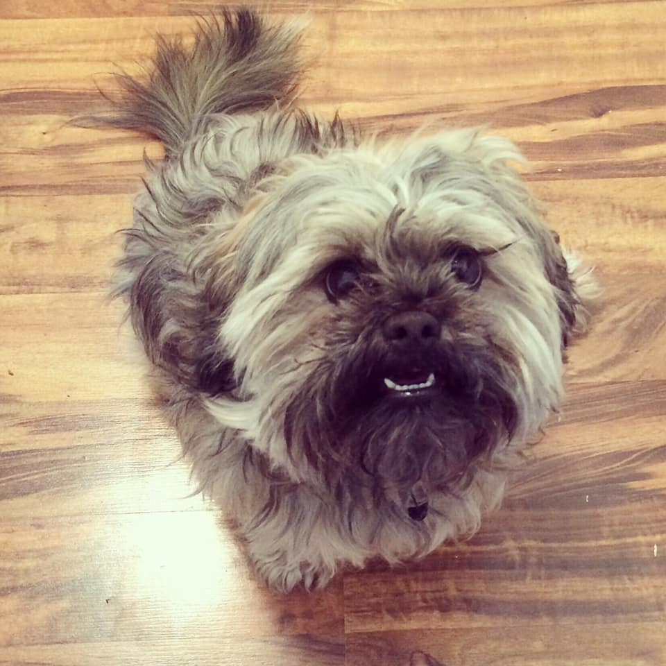 Reader Suggestions: How To Save Money On Pet Care - Frugalwoods