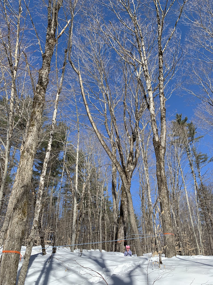"""0eab44ba3e7 Kidwoods sitting in the middle of our sugar bush. """"Sitting"""" is not the  right term  she was having a tantrum. So"""