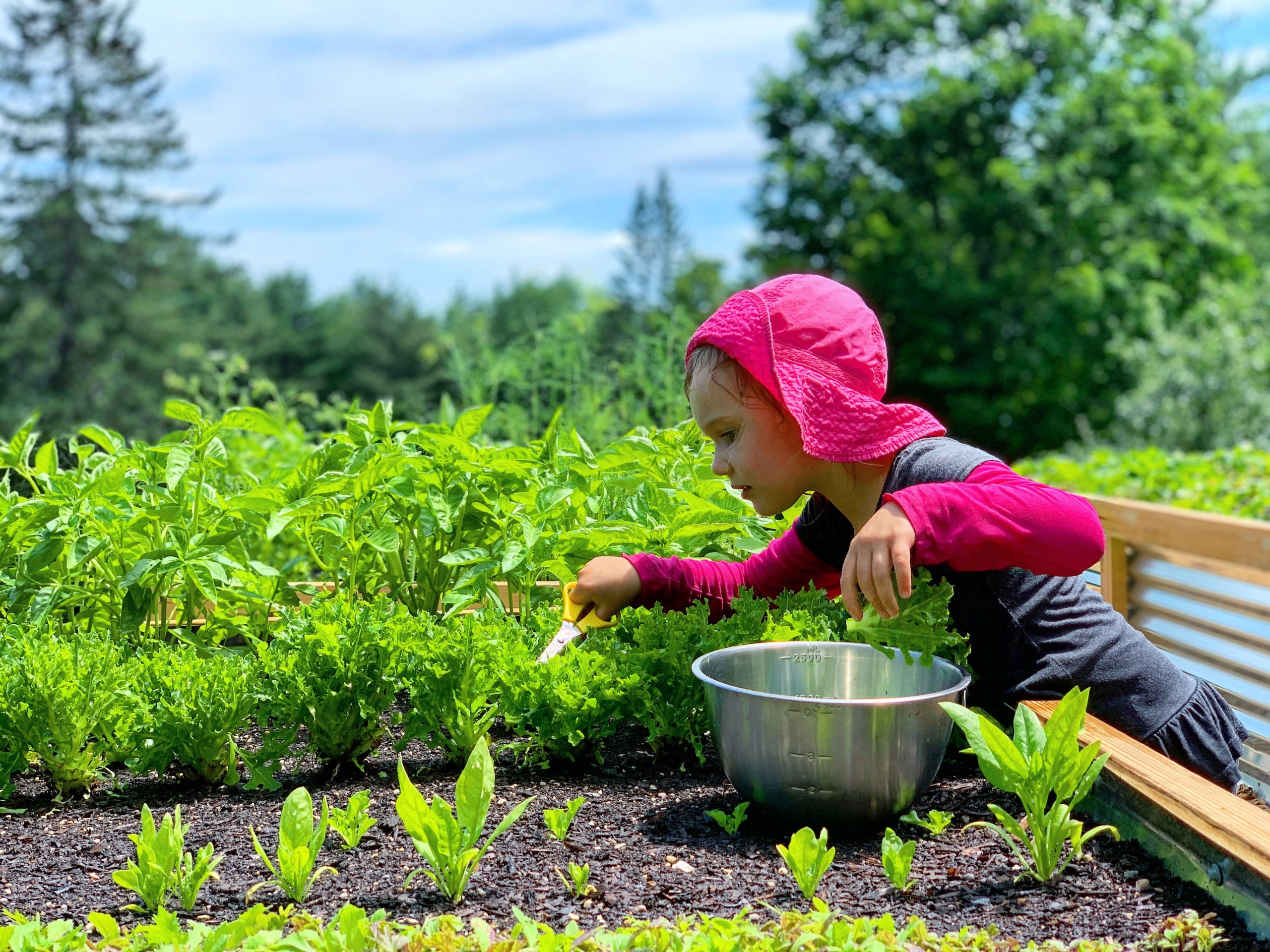 This Month On The Homestead: In The Garden, Picking Berries, Preserving Beans 3